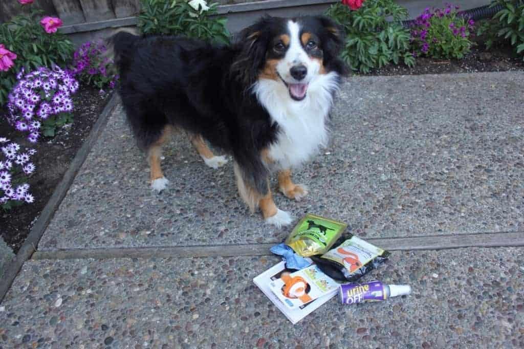 Pet Box Review