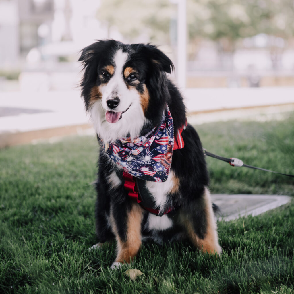 How to Keep Your Senior Dog Healthy